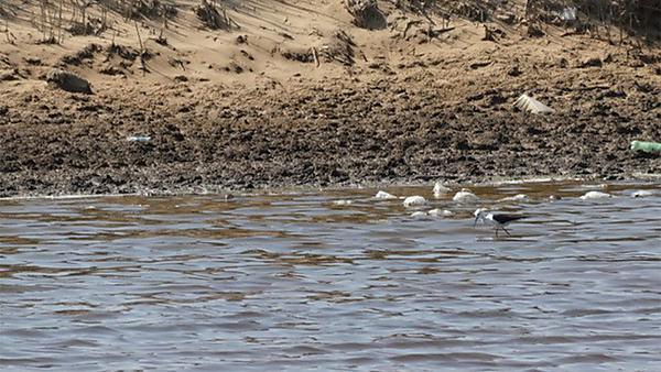 Plastic bags and bottles, wetlands, Walvis Bay