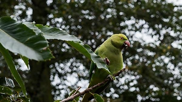<p>'Parakeet' 17/365v3 Just a Bird. <i>Image credit: Mark Seton (courtesy of flickr via CC BY-NC 2.0)</i><br></p>