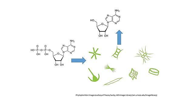 <p>Nutrient biogeochemistry&nbsp;</p>