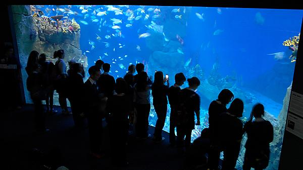 <p>Students at National Marine Aquarium Plymouth</p>