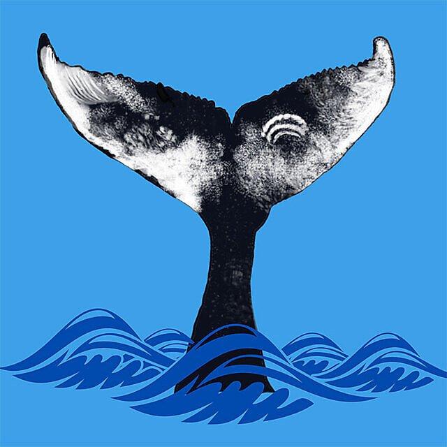 <p>A Whale's Tail</p>