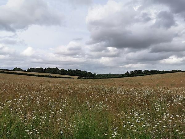 <p>Landscape image</p>