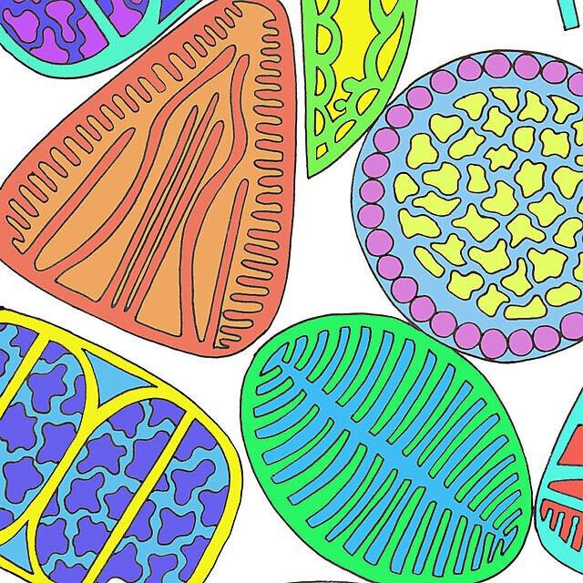 <p>Diatom colouring book square</p>