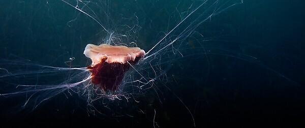 <p>Image courtesy of Peter Bardsley/Marine Conservation Society</p>