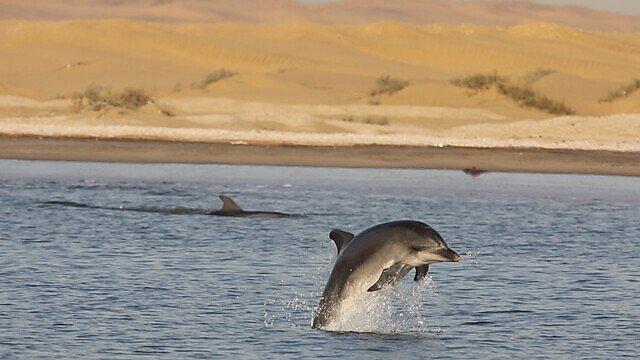 <p>Bottlenose dolphins (CREDIT: TESS GRIDLEY)</p>