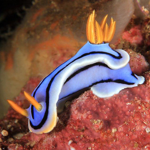 <p>Sea slug<br></p>