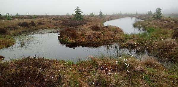 <p>Peatlands report (Picture by John Martin)</p>