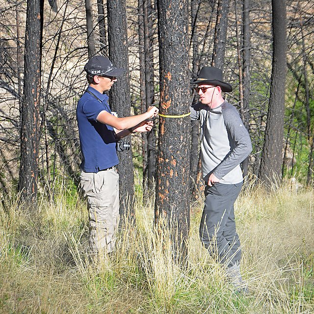 <p>  Geography fieldwork - Pacific North West -&nbsp;                Students tree measuring    <br></p>