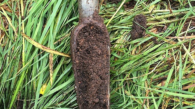 <p>Dartmoor soil</p>