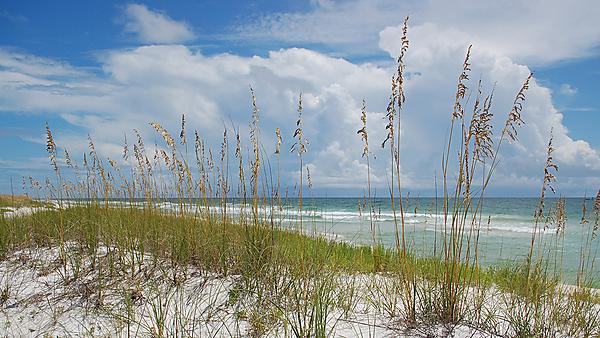 <p>Coastal management. coast. beach. florida. ecology and evolution</p>