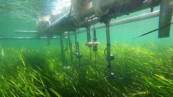 The effect of seagrass meadows on sediment dynamics and shoreline stability through modifications of waves and tidal flows