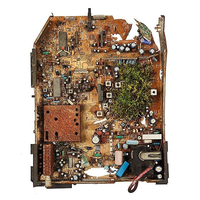 <p>Diana Lelonek - motherboard nature</p>