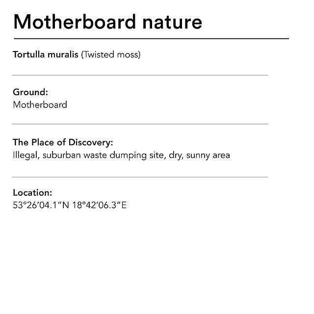 <p>  Diana Lelonek motherboard nature text<br></p>