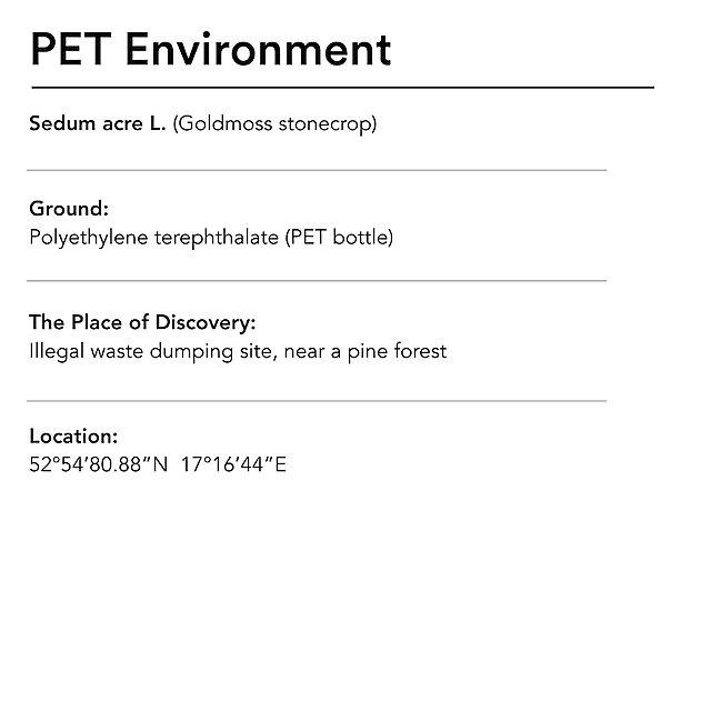 <p>  Diana Lelonek pet environment<br></p>