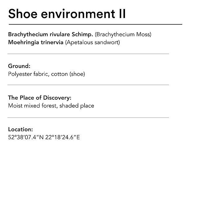 <p>  Diana Lelonek shoe environments 2 text<br></p>