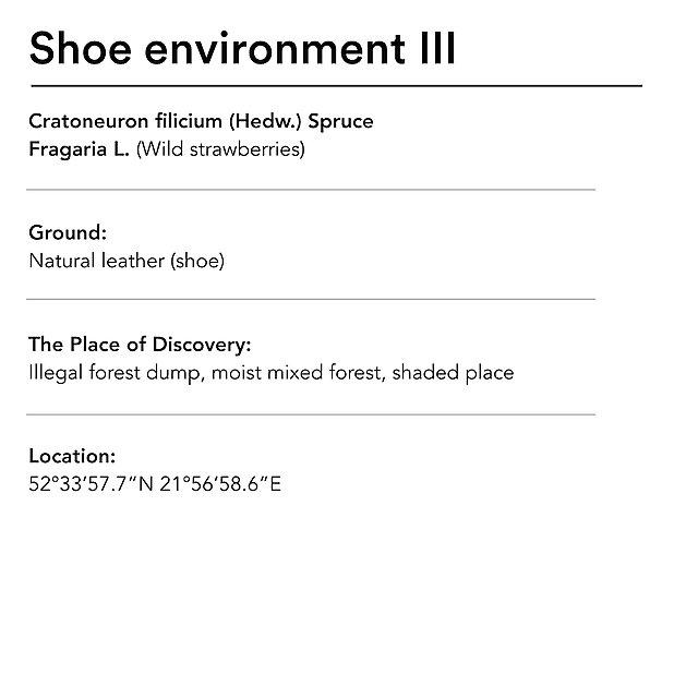 <p>  Diana Lelonek shoe environment 3 text<br></p>