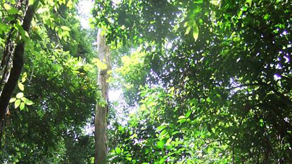 Climate Change Impacts on Forest Canopy Temperatures: From Mechanisms to Implications