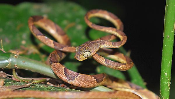 <p>Snake.&nbsp;  Ecology and Evolution Research Group  </p>