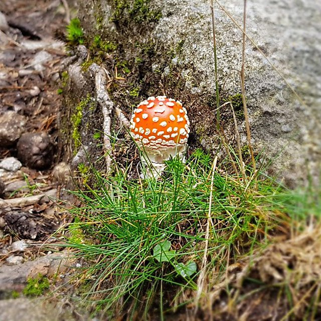 <p>  </p><div>Evolutionary Biology - Ecology and Evolution Research Group. muscaria<br></div><p></p>