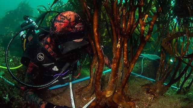 <p>Louise-Oceane diving</p>