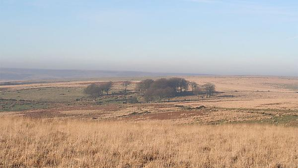 The remains of Larkbarrow Farm with its remnant shelter belts. Credit: Rob Wilson-North