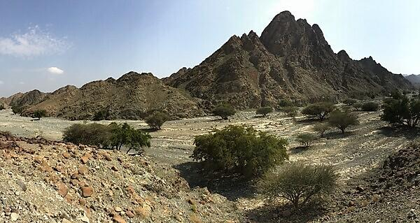 Spectacular exposures of oceanic crust in the Oman mountains provide a natural laboratory for studying seafloor spreading