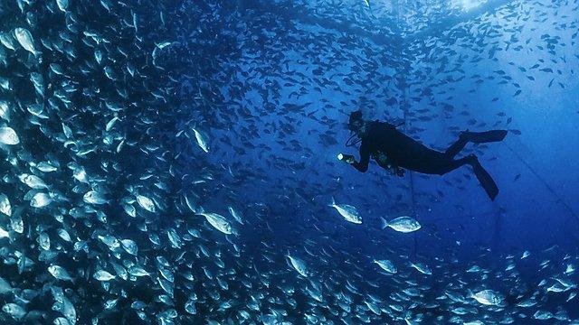 Ponza Island aquaculture nets