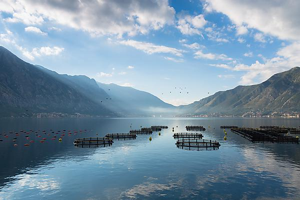 Discover more about MSc Sustainable Aquaculture Systems