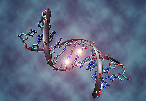DNA molecule (credit: By Christoph Bock (Max Planck Institute for Informatics) (Own work) [CC BY-SA 3.0 (http://creativecommons.org/licenses/by-sa/3.0)], via Wikimedia Commons)