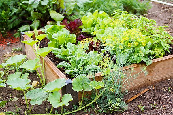 Community garden (shutterstock image_147307403.jpg)