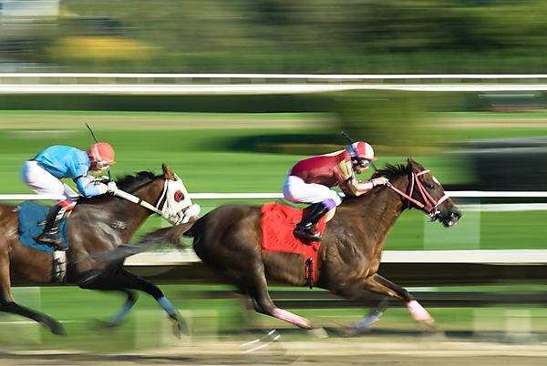 Horse racing (shutterstock_18583831)