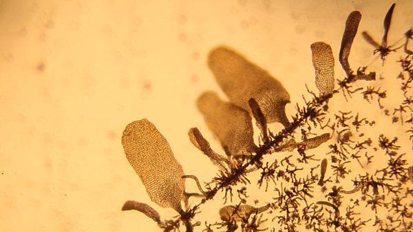 Responses of marine algae to heavy metal pollution